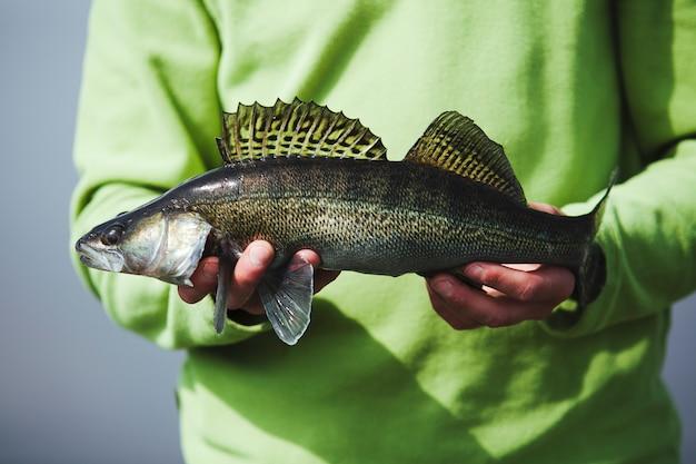 신선한 잡은 물고기를 잡고 어부의 손의 중앙부보기
