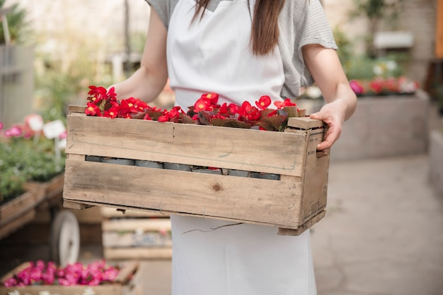 Midsection view of a woman's hand holding wooden crate with beautiful red begonia flowers