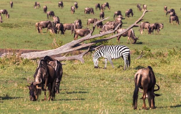 Миграция животных в саванне кении африка
