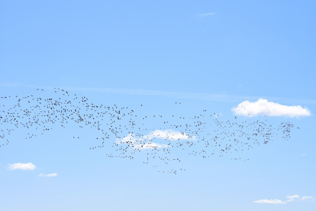 Migratory birds return home in spring to their habitats