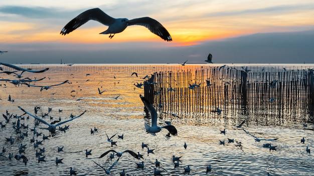 이동성 갈매기는 11 월과 4 월에 태국 방푸 해변으로 몰려 듭니다.