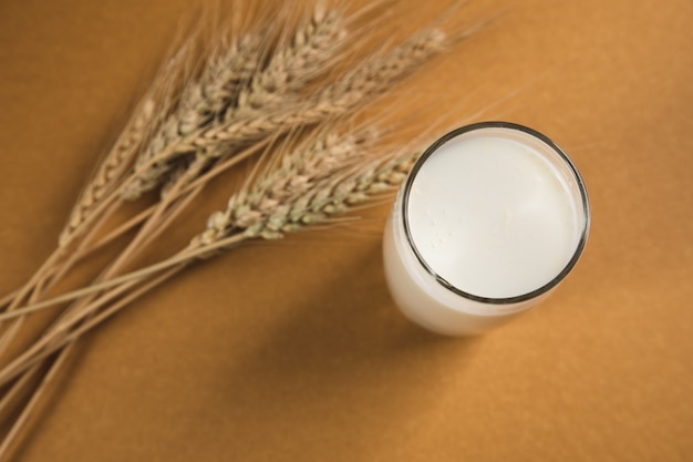 Milk in a glass and wheat on a brown surface