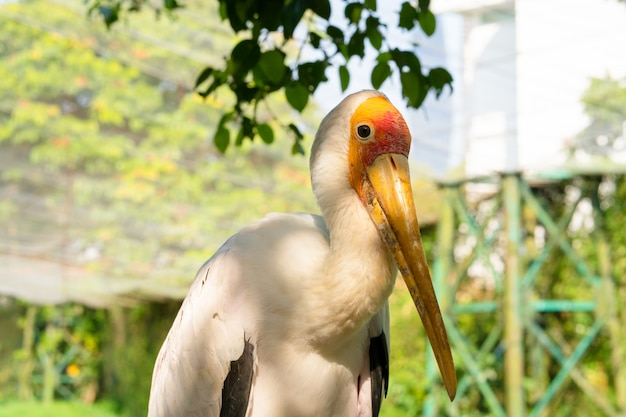 A milk stork sits close-up portrait. a stork sits under a tree
