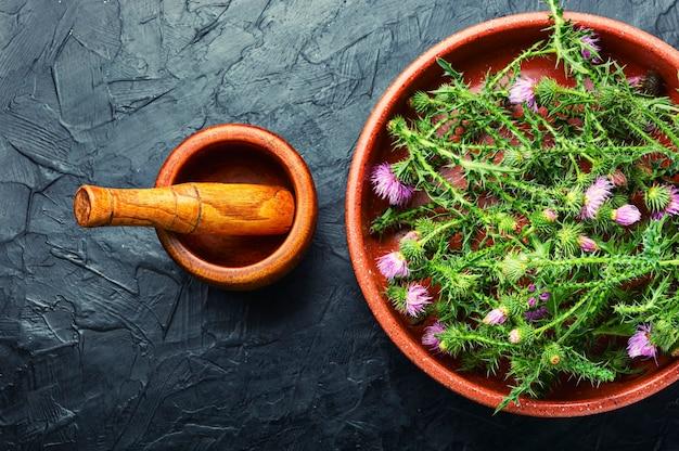 薬草にマリアアザミまたはマリアアザミを入れる野生の薬用植物