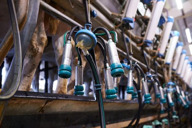 Доильный аппарат на молочной ферме крупным планом Premium Фотографии