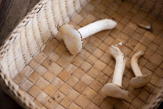 Молочные грибы выращивают в грибном хозяйстве. помещен в лоток для подготовки к очистке