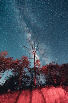 天の川と野原の夜の星ムードトーン
