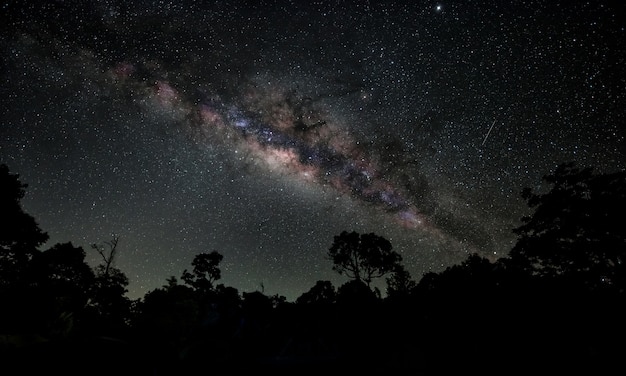 The milky way on dark sky and some trees. in the mountains at phetchaburi, thailand.