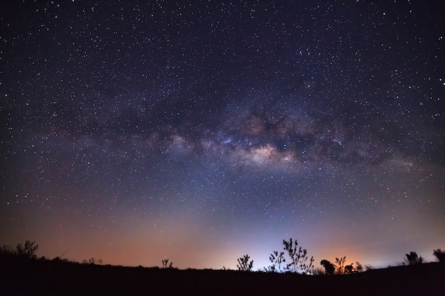 Milky way galaxy and silhouette of tree