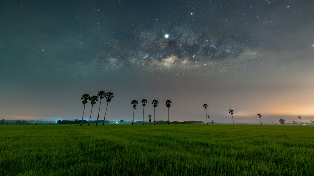 Milky way galaxy with row of palm tree in paddy fields