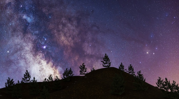 Milky way on mountain with pine trees