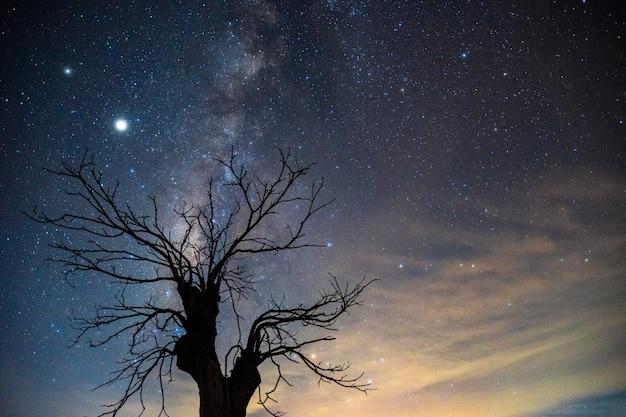 Млечный путь над мертвым деревом