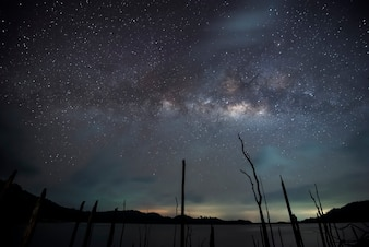 Milky way over dead tree