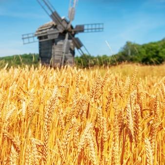 青い空と麦畑で製粉