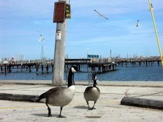 Milwaukee shoreline, birds