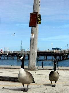 Milwaukee shoreline, marina