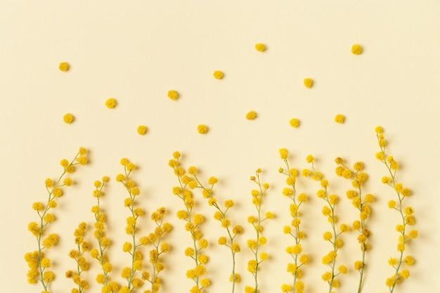 Цветок мимозы с круглым пушистым желтым цветком крупным планом