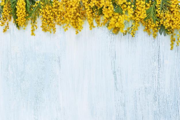 Цветки мимозы граничат с синим. копировать пространство