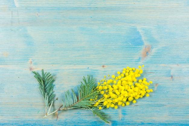 Цветы мимозы на синей деревянной поверхности Premium Фотографии
