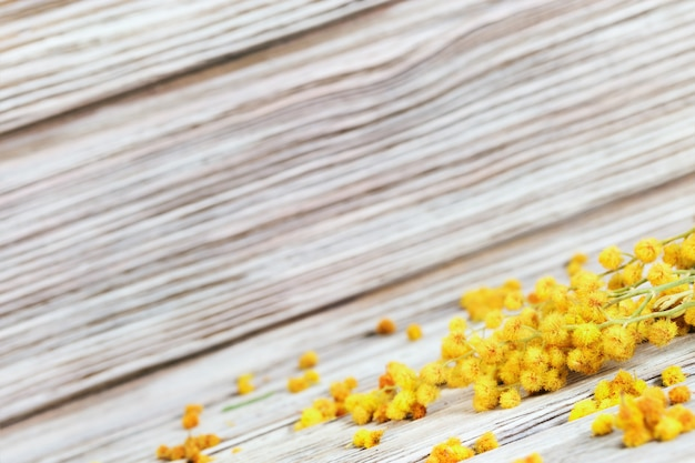 Mimosa flowers on rustic wooden surface