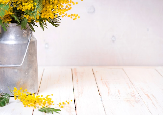 Mimosa flowers in a vintage metal milk can on the rustic white wooden background.