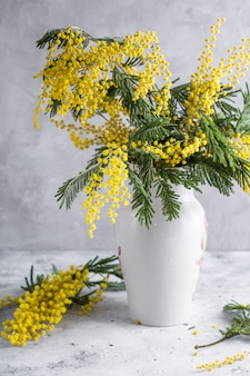 Mimosa in a white vase on a gray stone