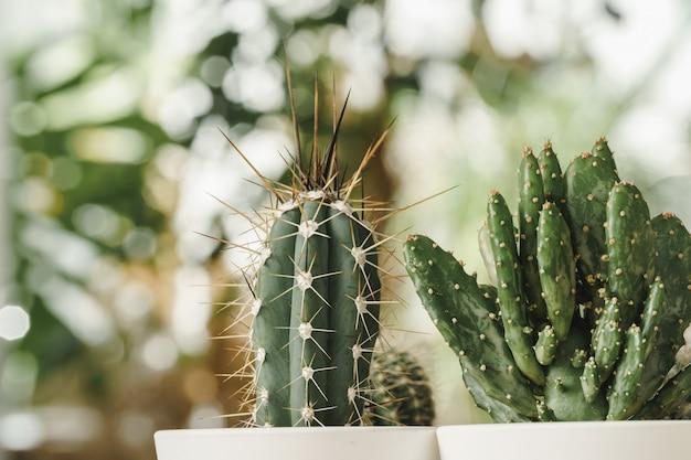Mini cactus plant potted on blurred botanical garden background