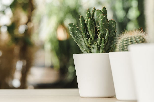 Mini cactus plant potted on blurred botanical garden