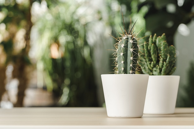 Mini cactus plant potted on blurred garden background