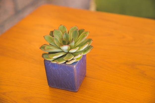 세라믹 냄비에 나무 테이블 background.green 즙이 많은 식물에 꽃 echeveria 즙이 많은 집 식물의 미니 점토 냄비