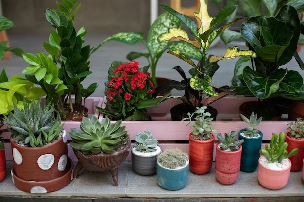 다육 식물과 선인장의 미니 정원 냄비에 관상용 식물과 관상용 식물의 수집