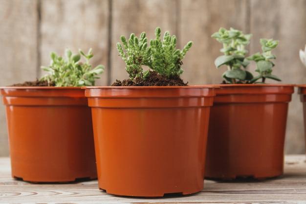 Mini green succulent house plants in brown plastic pots