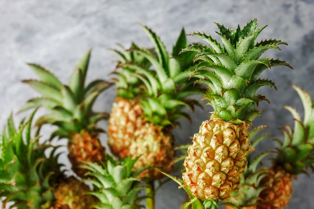 Mini pineapple tropical fruit for summer concept