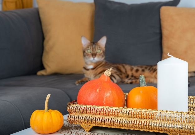 Mini pumpkins and a candle on the table near the sofa with a lying cat in the living room.