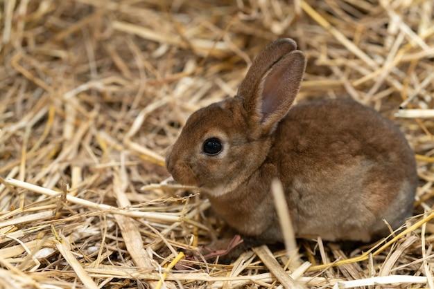 Mini rex is a breed of domestic rabbit