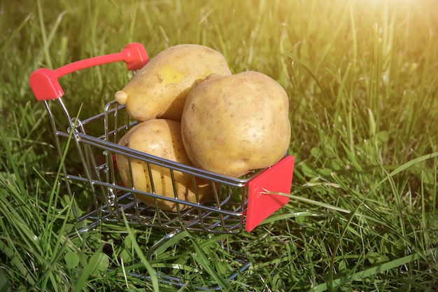 Mini shopping cart or trolley with potatoes against natural green back with sunlight. healthy food