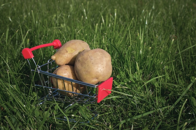 Mini shopping trolley and potatoes against natural green background. natural food concept.