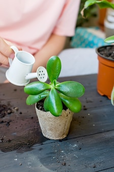 Mini succulent in a peat pot on the table afte transplanting