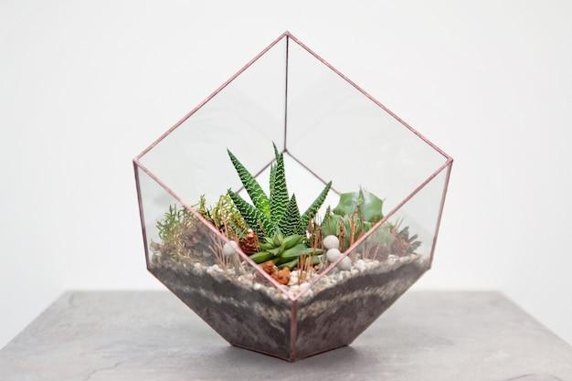 Мини-суккуленты в стеклянном террариуме