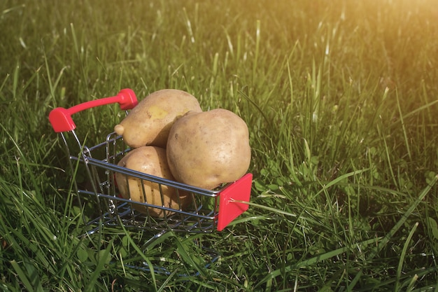 Mini trolley cart with potatoes on green grass background. copy space, shopping, sales and marketing