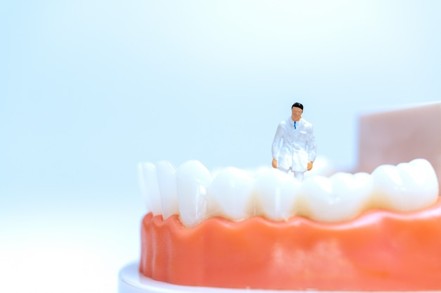Miniature dentist observing and discussing about human teeth with gums