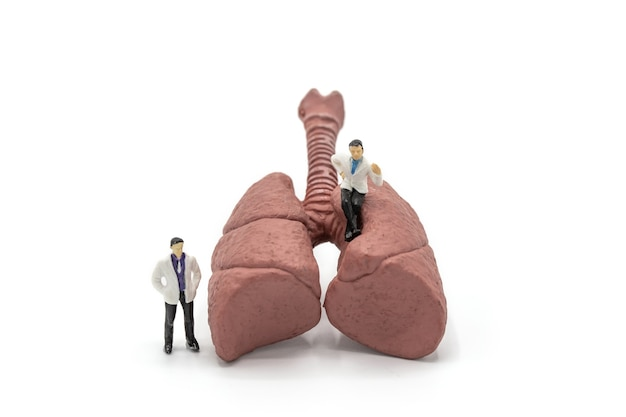 Miniature doctor and nurse observing and discussing about human lungs