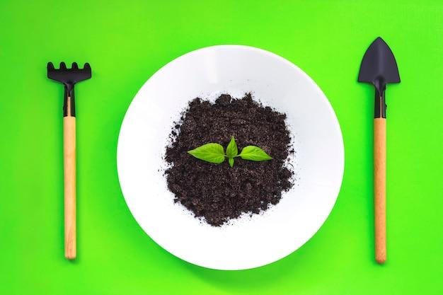미니어처 원예 도구, 흙이 있는 흰색 접시, 어린 녹색 자연이 녹색 배경에 싹을 틔웁니다. 평면도. 가정 원예, 생태 개념입니다.