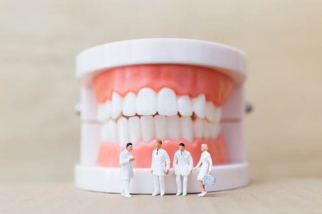 Miniature people : dentist and nurse observing and discussing about human teeth with gums and enamel