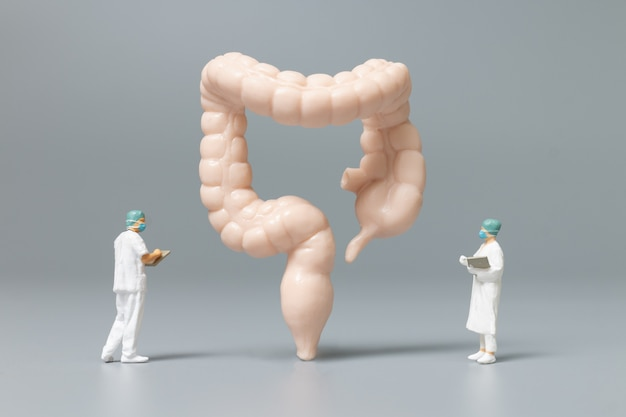 Miniature people doctor and nurse observing and discussing about human large intestine, science and medical concep