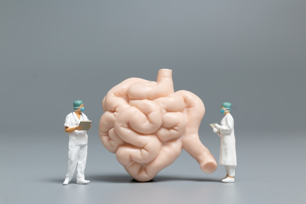 Miniature people doctor and nurse observing and discussing about human small intestine, science and medical concep