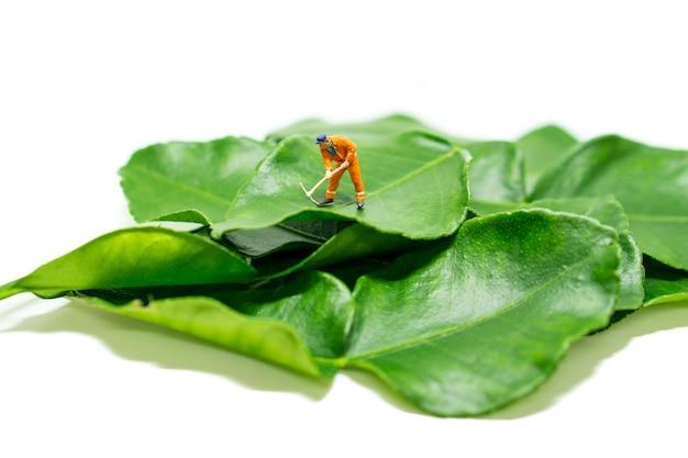 Miniature people engineer work on bergamot leaf
