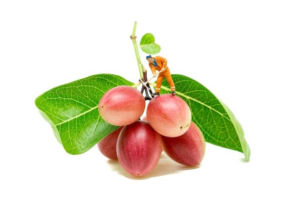 Miniature people engineer work on red fruit