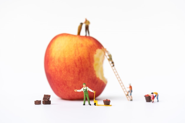Miniature people, farmer climbing on the ladder for collecting red apples from big apple
