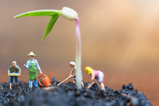 Miniature people, gardeners take care growing sprout in field